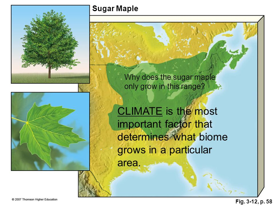 Fig. 3-12, p. 58 Sugar Maple Why does the sugar maple only grow in this range? CLIMATE is the most important factor that determines what biome grows i