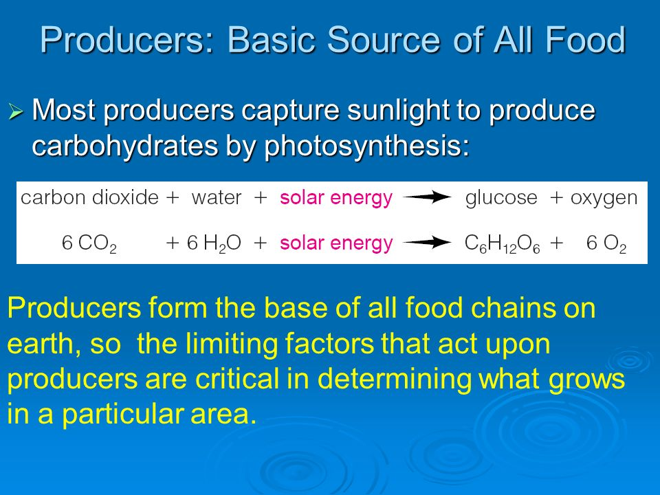 Producers: Basic Source of All Food Most producers capture sunlight to produce carbohydrates by photosynthesis: Most producers capture sunlight to pro