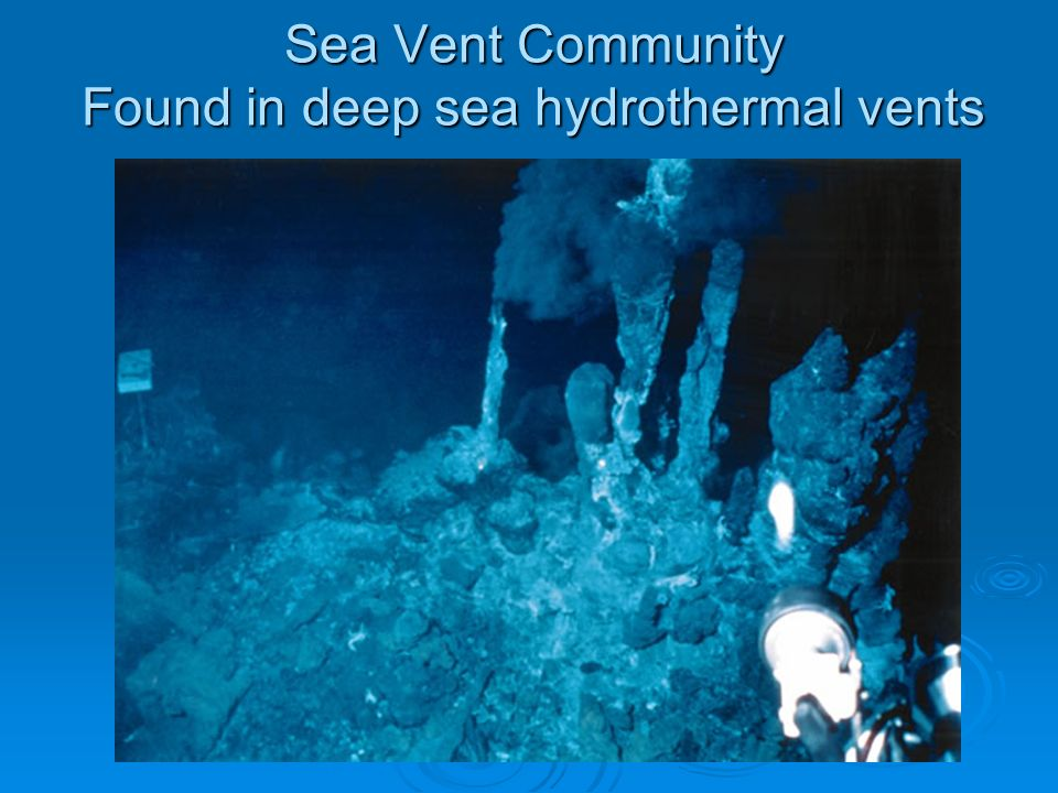 Sea Vent Community Found in deep sea hydrothermal vents