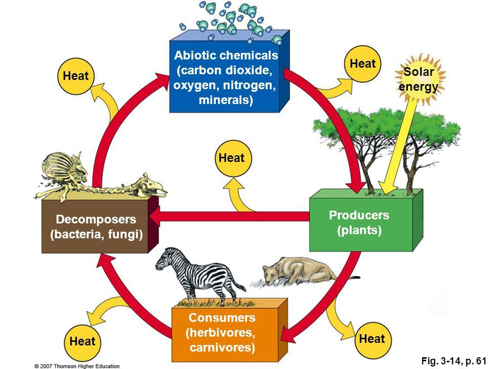 Fig. 3-14, p. 61 Abiotic chemicals (carbon dioxide, oxygen, nitrogen, minerals) Heat Solar energy Consumers (herbivores, carnivores) Producers (plants