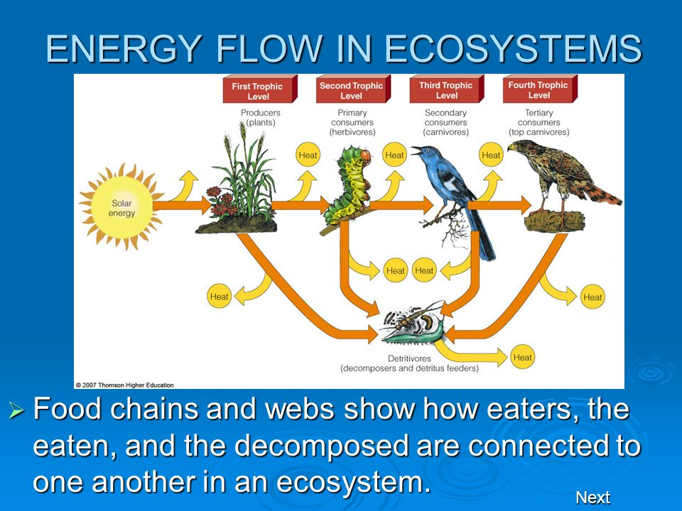 ENERGY FLOW IN ECOSYSTEMS Food chains and webs show how eaters, the eaten, and the decomposed are connected to one another in an ecosystem. Food chain