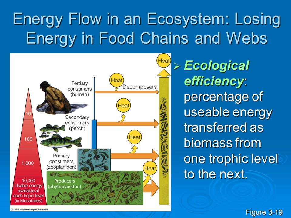 Energy Flow in an Ecosystem: Losing Energy in Food Chains and Webs Ecological efficiency: percentage of useable energy transferred as biomass from one