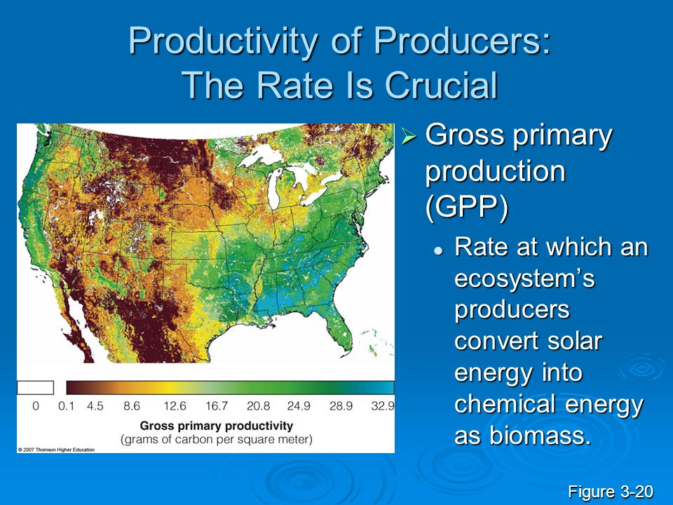 Productivity of Producers: The Rate Is Crucial Gross primary production (GPP) Gross primary production (GPP) Rate at which an ecosystems producers convert solar energy into chemical energy as biomass.