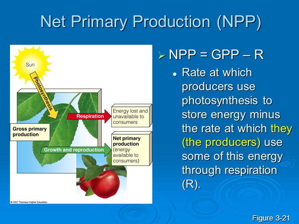 Net Primary Production (NPP) NPP = GPP – R NPP = GPP – R Rate at which producers use photosynthesis to store energy minus the rate at which they (the