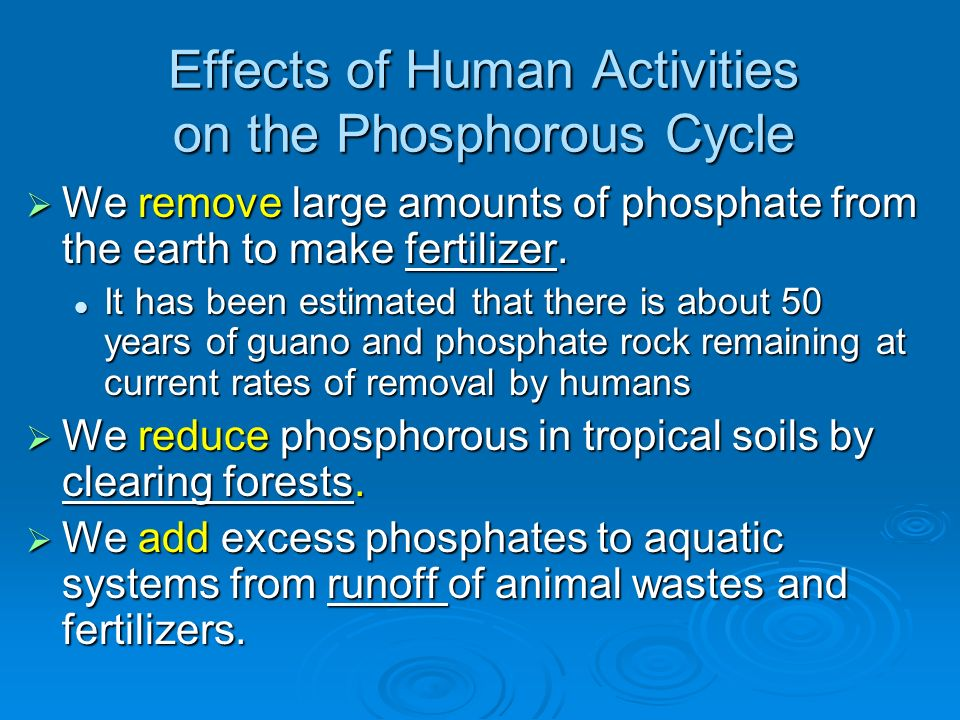Effects of Human Activities on the Phosphorous Cycle We remove large amounts of phosphate from the earth to make fertilizer. We remove large amounts o