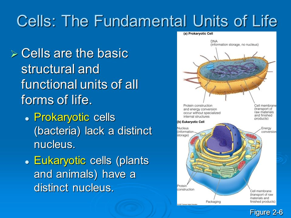 Cells: The Fundamental Units of Life Cells are the basic structural and functional units of all forms of life. Cells are the basic structural and func