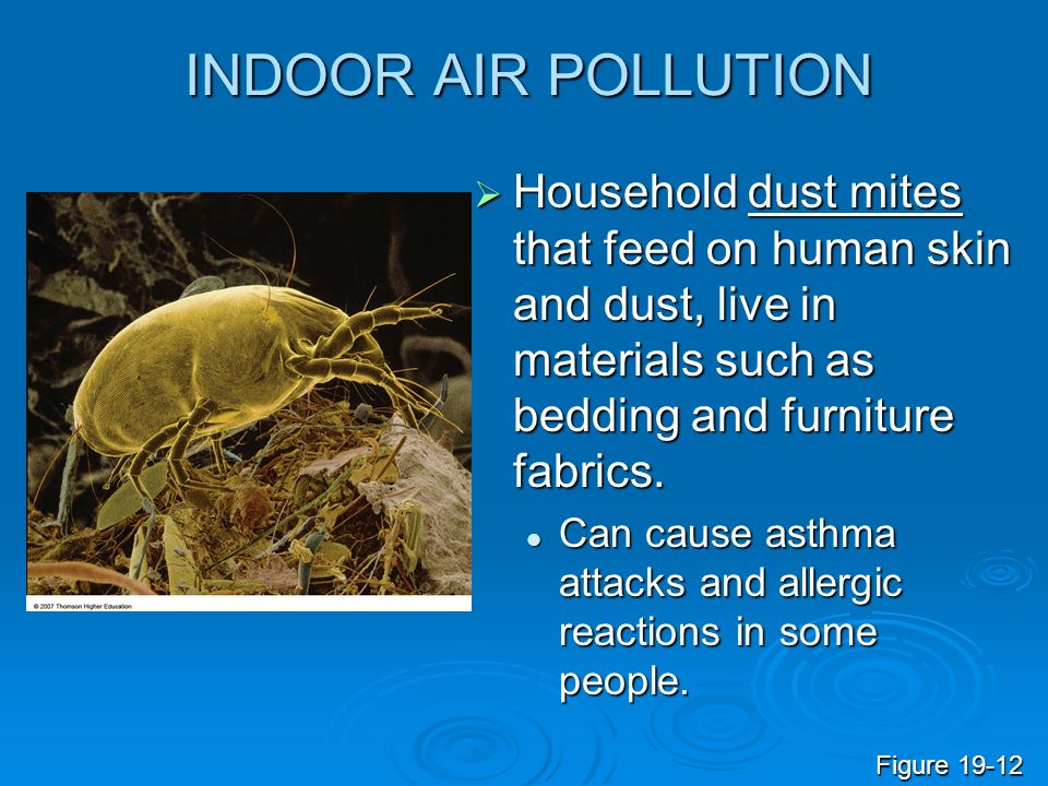 INDOOR AIR POLLUTION Household dust mites that feed on human skin and dust, live in materials such as bedding and furniture fabrics. Household dust mi