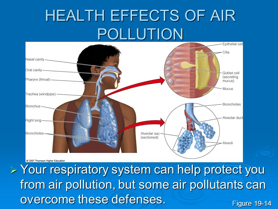 HEALTH EFFECTS OF AIR POLLUTION Your respiratory system can help protect you from air pollution, but some air pollutants can overcome these defenses.
