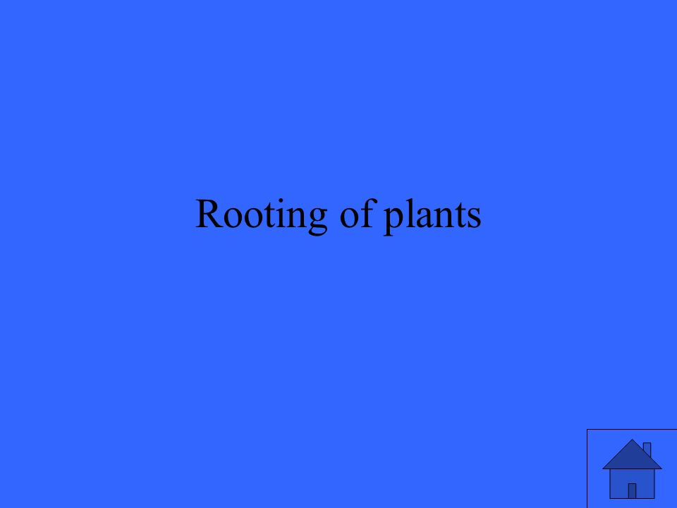 Rooting of plants