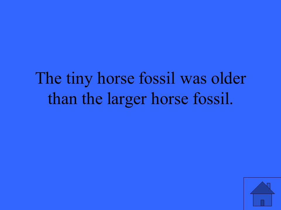 The tiny horse fossil was older than the larger horse fossil.