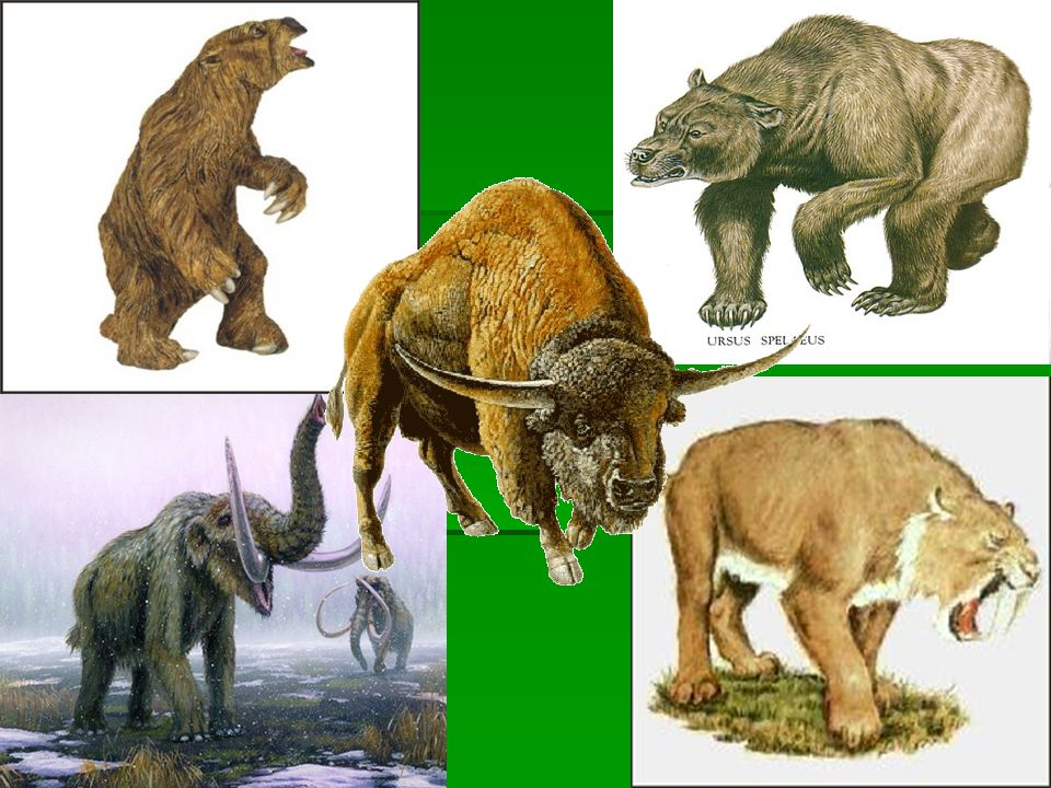 Hunter-Gatherers Overhunting may have led to the disappearance of some large mammal species, including: giant slothsgiant sloths giant bisongiant biso