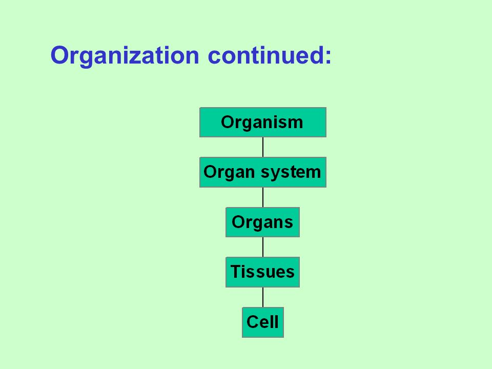 2.ORGANIZATION A. Nucleic Acids-DNA/RNA B. Proteins-amino acids C. Carbohydrates-monosaccharides D. Lipids-fatty acids Complex Chemical Compounds