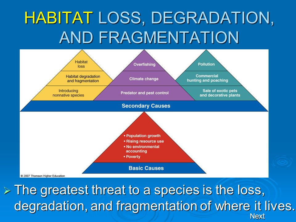 HABITAT LOSS, DEGRADATION, AND FRAGMENTATION The greatest threat to a species is the loss, degradation, and fragmentation of where it lives. The great