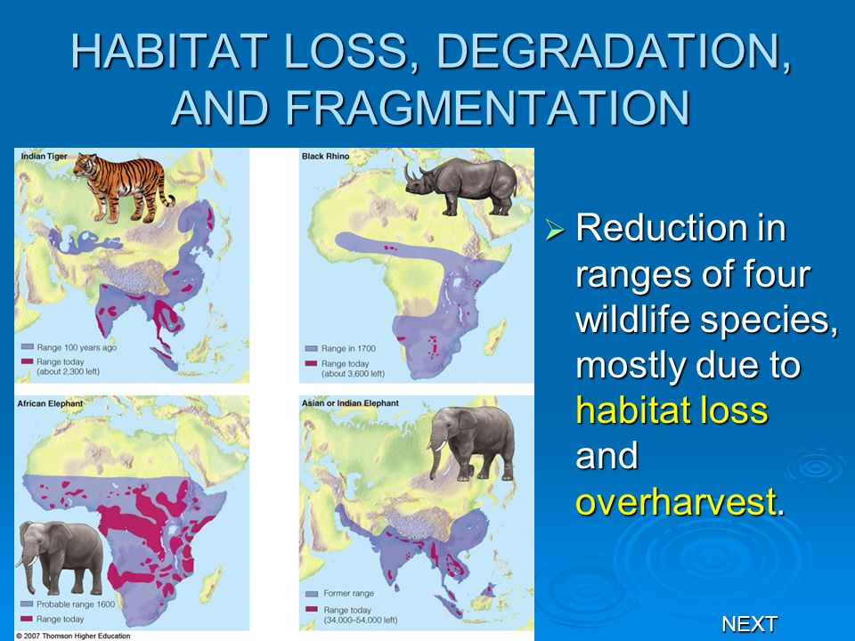 HABITAT LOSS, DEGRADATION, AND FRAGMENTATION Reduction in ranges of four wildlife species, mostly due to habitat loss and overharvest. Reduction in ra