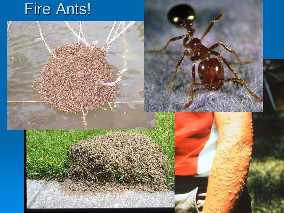 Fire Ants! Figure 11-12