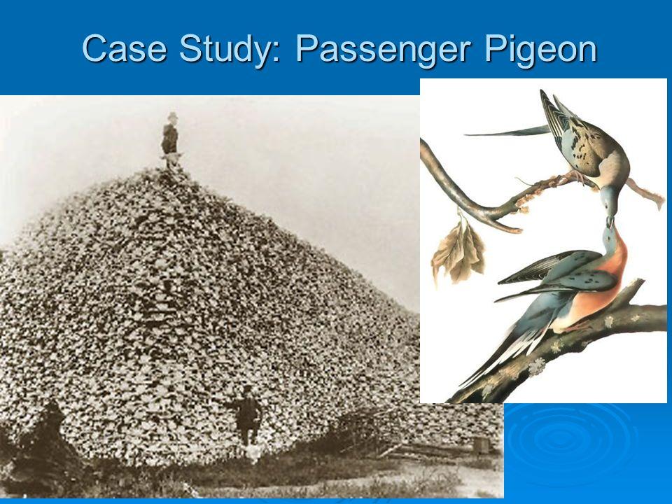 Case Study: Passenger Pigeon