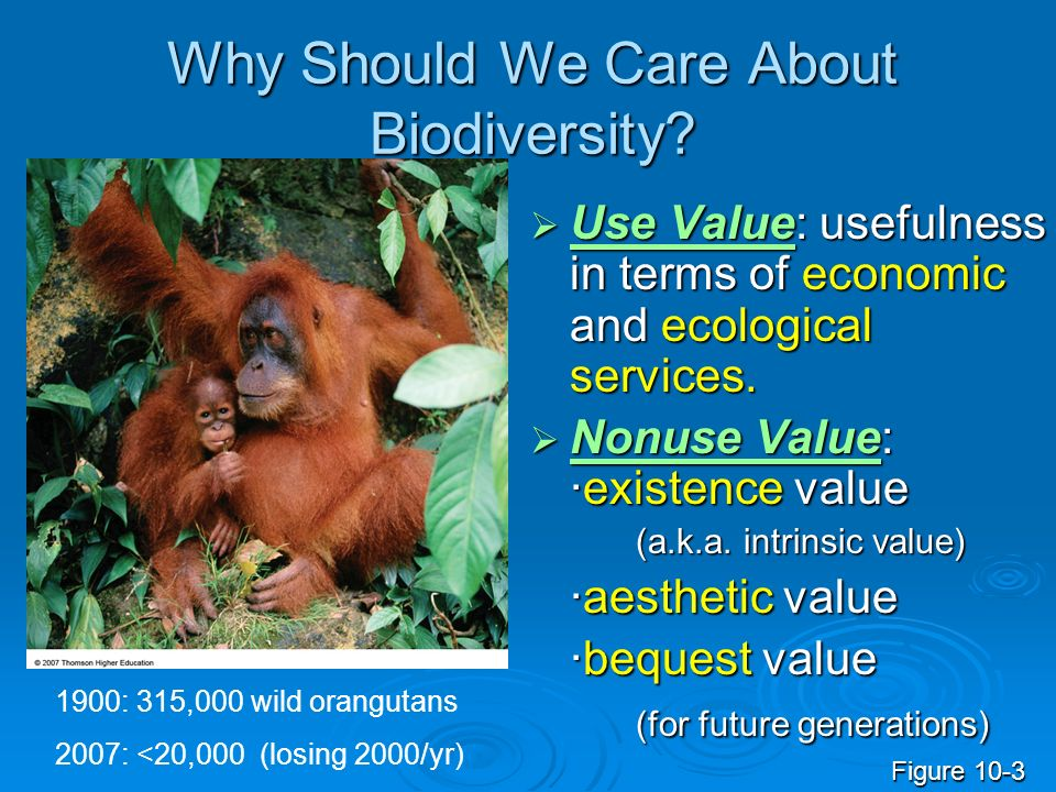 Why Should We Care About Biodiversity? Use Value: usefulness in terms of economic and ecological services. Use Value: usefulness in terms of economic