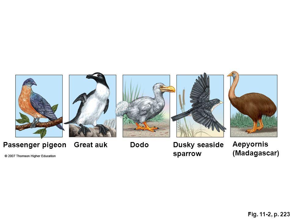 Fig. 11-2, p. 223 Aepyornis (Madagascar) Passenger pigeonGreat aukDodoDusky seaside sparrow