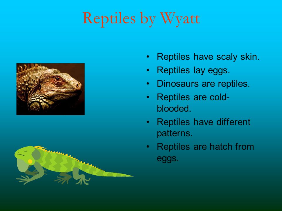 Reptiles by Wyatt Reptiles have scaly skin. Reptiles lay eggs. Dinosaurs are reptiles. Reptiles are cold- blooded. Reptiles have different patterns. R