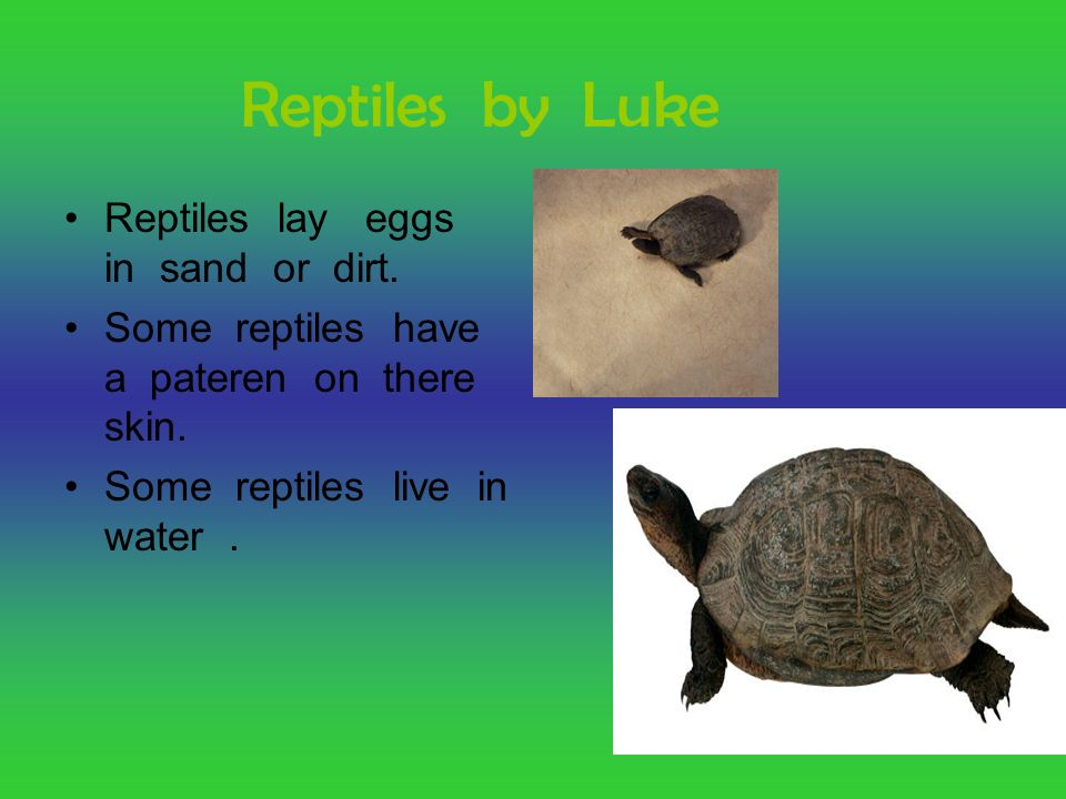 Reptiles by Luke Reptiles lay eggs in sand or dirt. Some reptiles have a pateren on there skin. Some reptiles live in water.