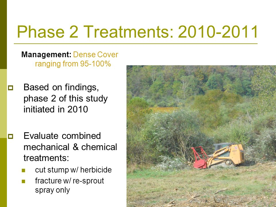 Phase 2 Treatments: 2010-2011 Management: Dense Cover ranging from 95-100% Based on findings, phase 2 of this study initiated in 2010 Evaluate combined mechanical & chemical treatments: cut stump w/ herbicide fracture w/ re-sprout spray only