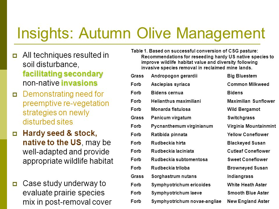 Insights: Autumn Olive Management facilitating secondary invasions All techniques resulted in soil disturbance, facilitating secondary non-native invasions Demonstrating need for preemptive re-vegetation strategies on newly disturbed sites Hardy seed & stock, native to the US, may be well-adapted and provide appropriate wildlife habitat Case study underway to evaluate prairie species mix in post-removal cover Table 1.