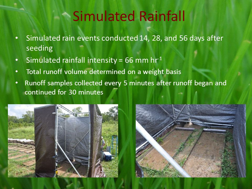 Simulated Rainfall Simulated rain events conducted 14, 28, and 56 days after seeding Simulated rainfall intensity = 66 mm hr -1 Total runoff volume determined on a weight basis Runoff samples collected every 5 minutes after runoff began and continued for 30 minutes