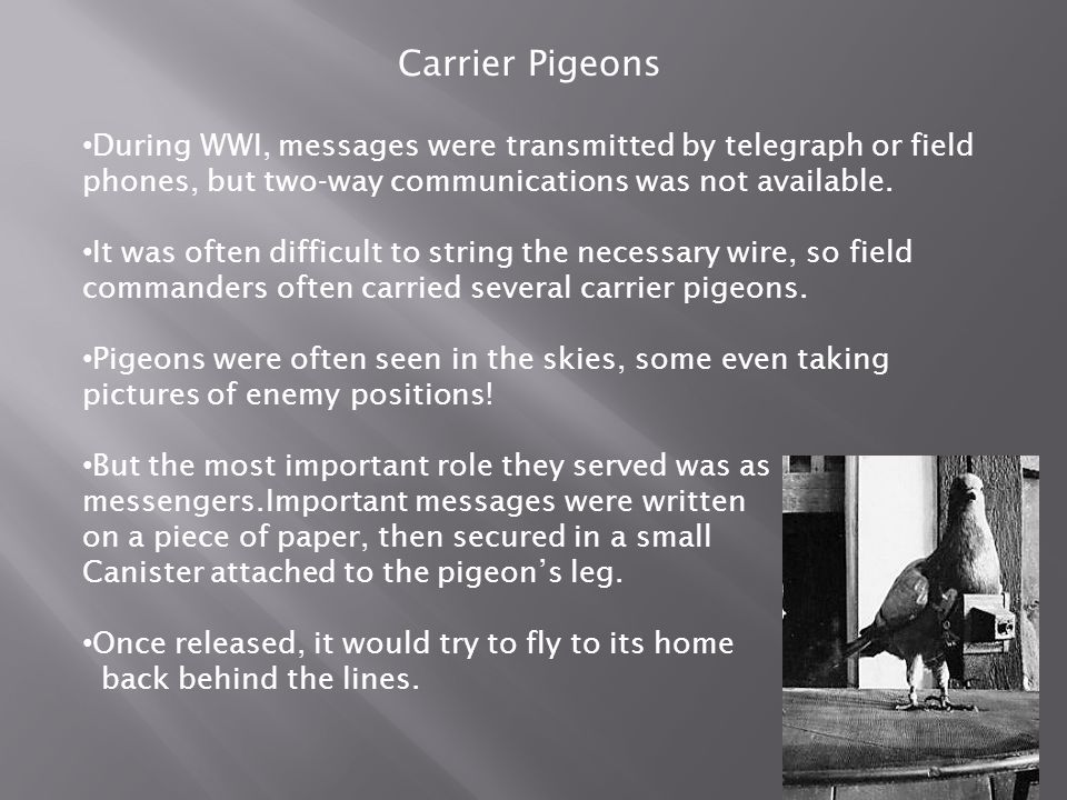 Carrier Pigeons During WWI, messages were transmitted by telegraph or field phones, but two-way communications was not available. It was often difficu