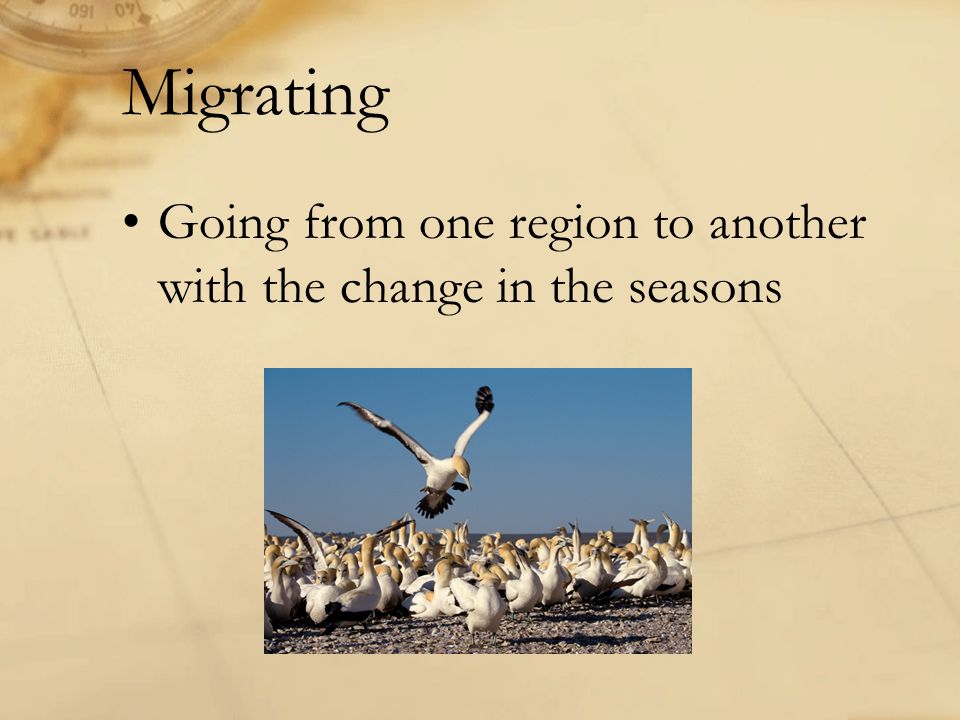 Going from one region to another with the change in the seasons Migrating