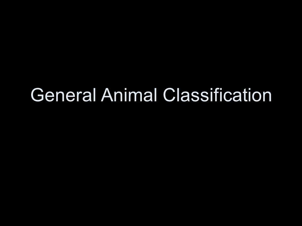 Bobcat, Felis rufus Class Mammalia Order Carnivora Phylum Chordata