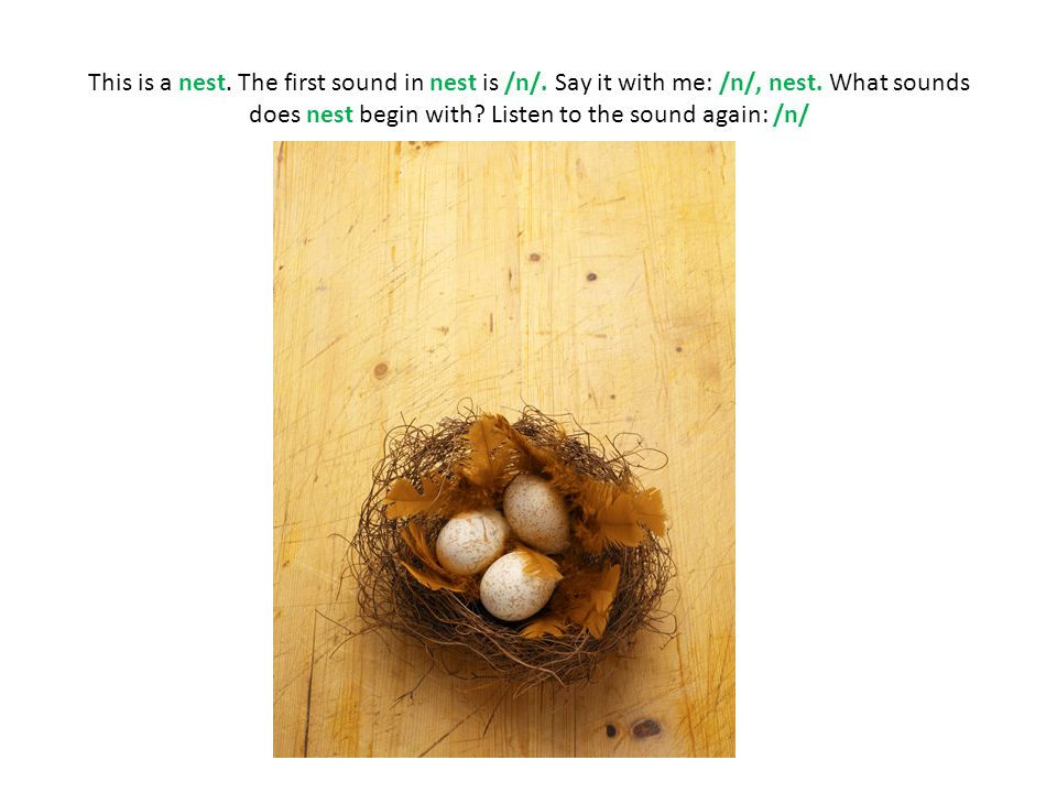 This is a nest. The first sound in nest is /n/. Say it with me: /n/, nest. What sounds does nest begin with? Listen to the sound again: /n/