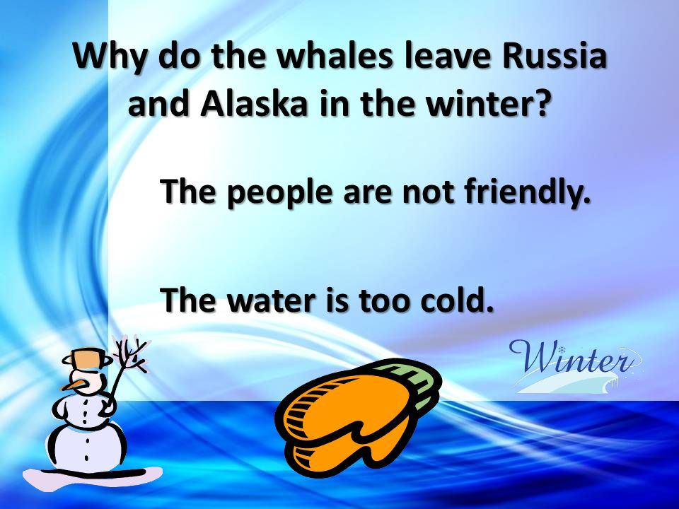 Why do the whales leave Russia and Alaska in the winter? The people are not friendly. The water is too cold.