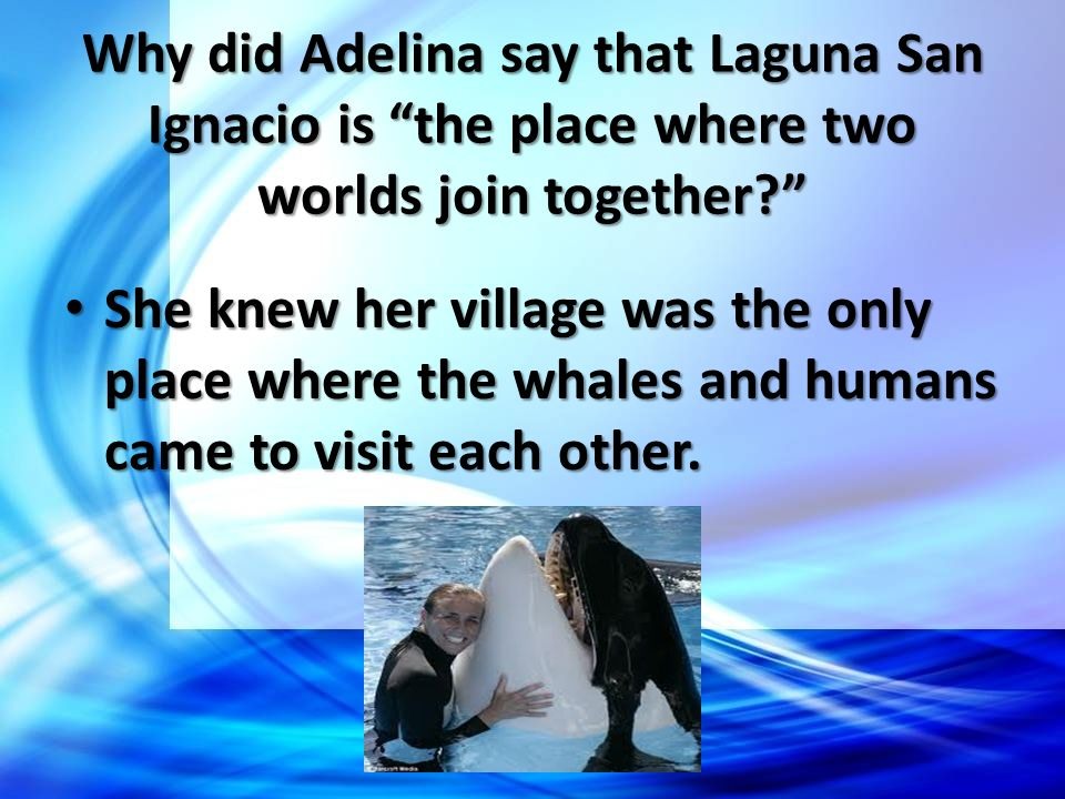 Why did Adelina say that Laguna San Ignacio is the place where two worlds join together? She knew her village was the only place where the whales and