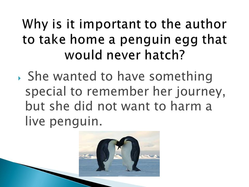 She wanted to have something special to remember her journey, but she did not want to harm a live penguin.
