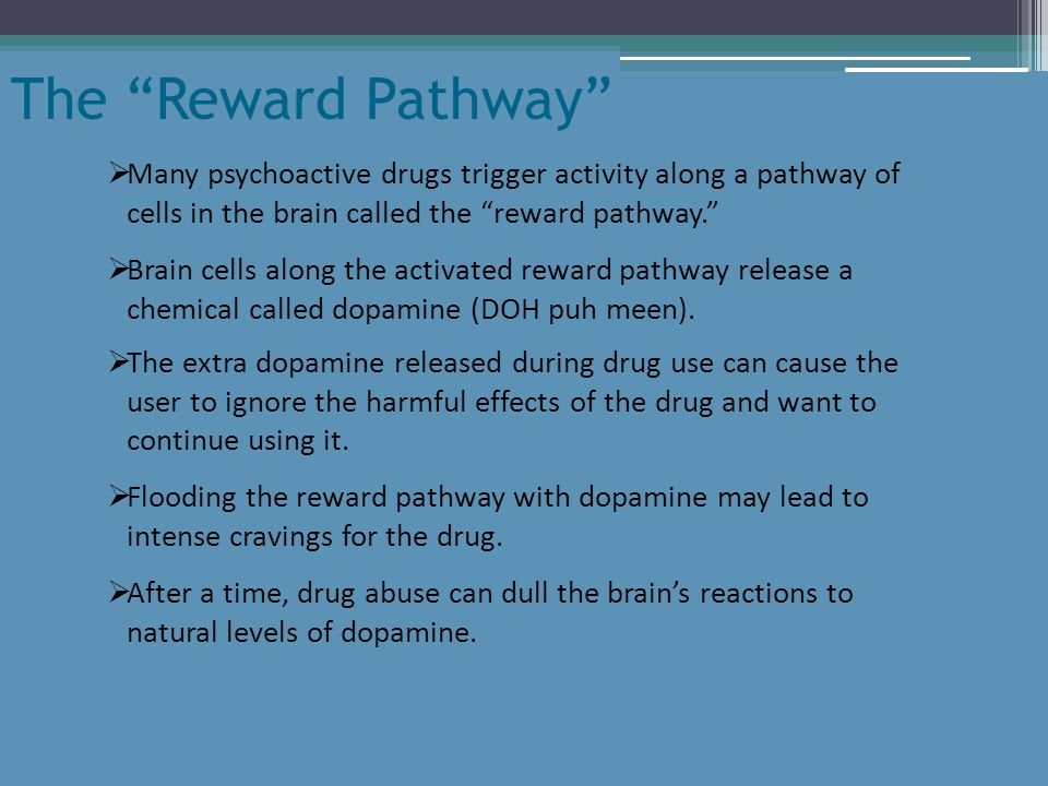 Many psychoactive drugs trigger activity along a pathway of cells in the brain called the reward pathway. The Reward Pathway Brain cells along the act