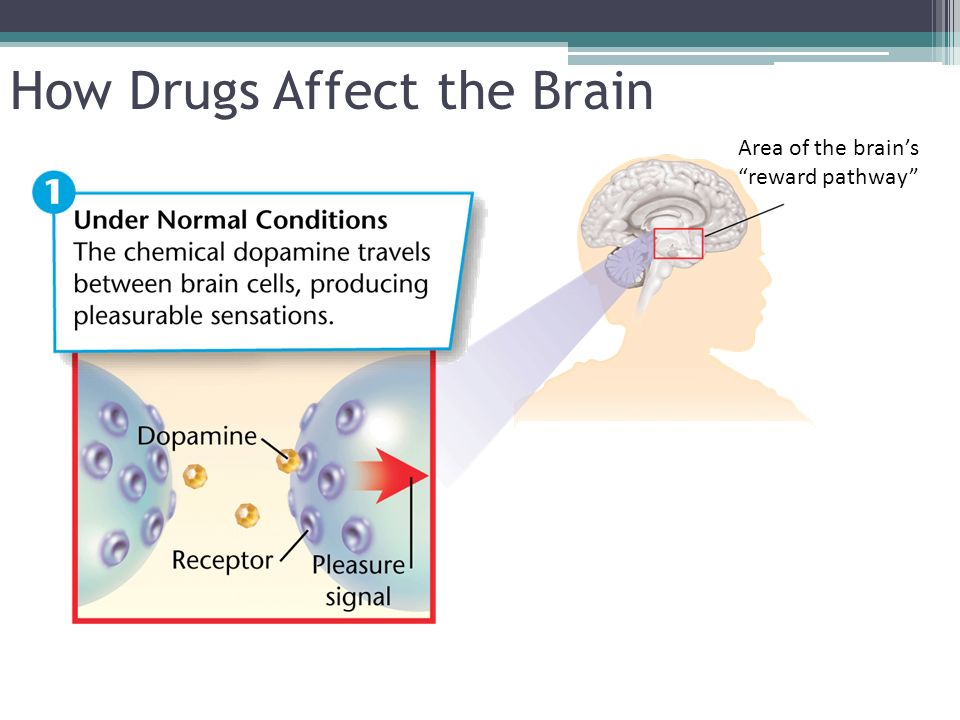Slide 6 of 32 How Drugs Affect the Brain Area of the brains reward pathway
