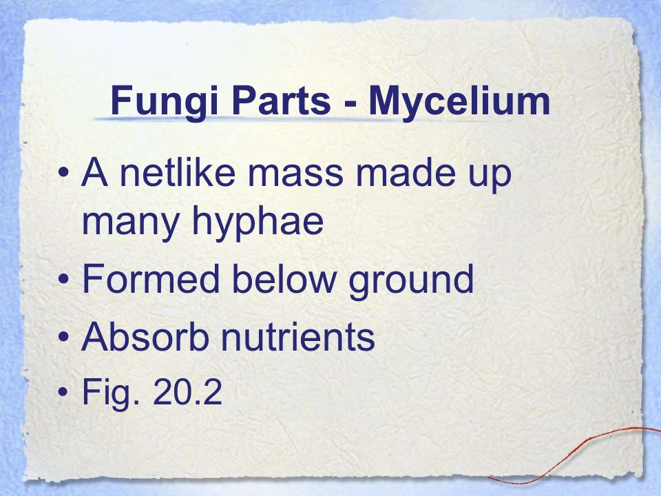 Fungi Parts - Mycelium A netlike mass made up many hyphae Formed below ground Absorb nutrients Fig. 20.2