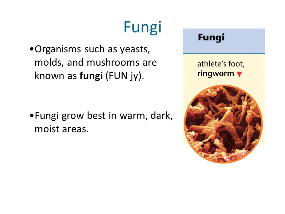 Slide 6 of 17 Organisms such as yeasts, molds, and mushrooms are known as fungi (FUN jy). Fungi Fungi grow best in warm, dark, moist areas.