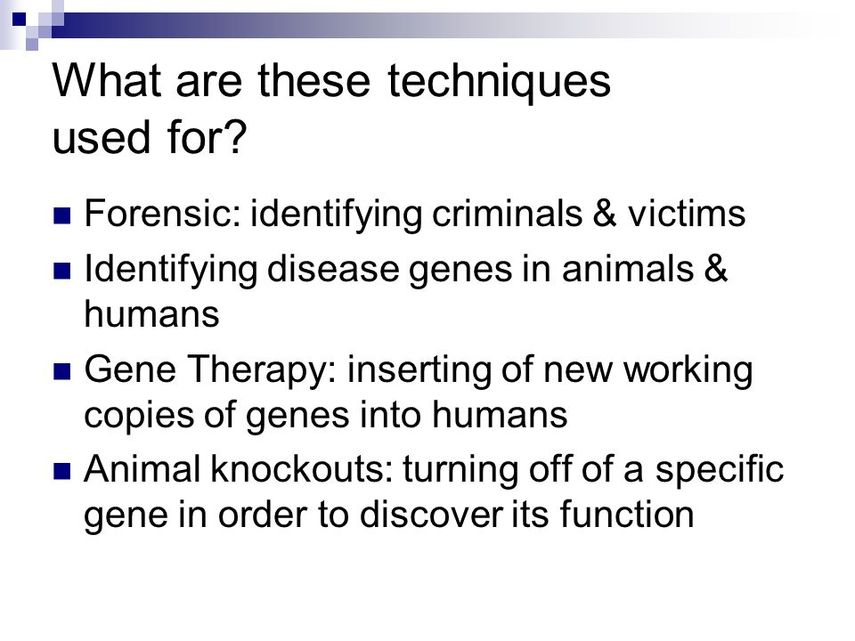 What are these techniques used for? Forensic: identifying criminals & victims Identifying disease genes in animals & humans Gene Therapy: inserting of