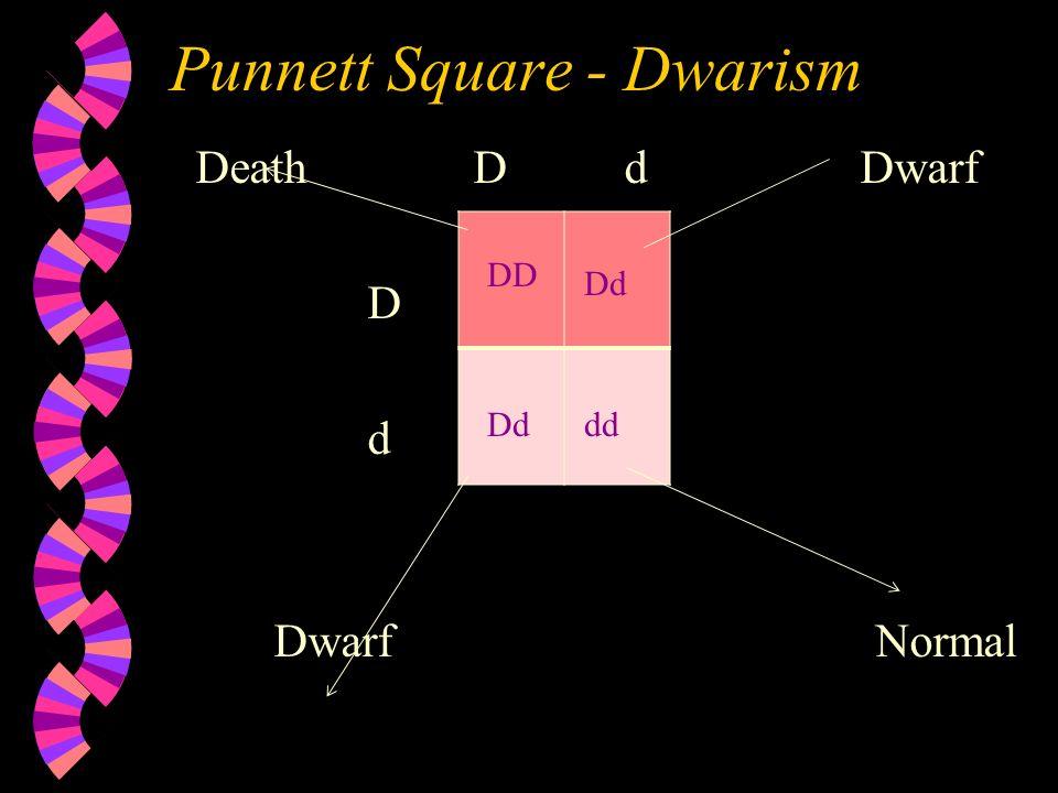 Punnett Square - Dwarism DeathD d Dwarf D d Dwarf Normal DD Dd dd