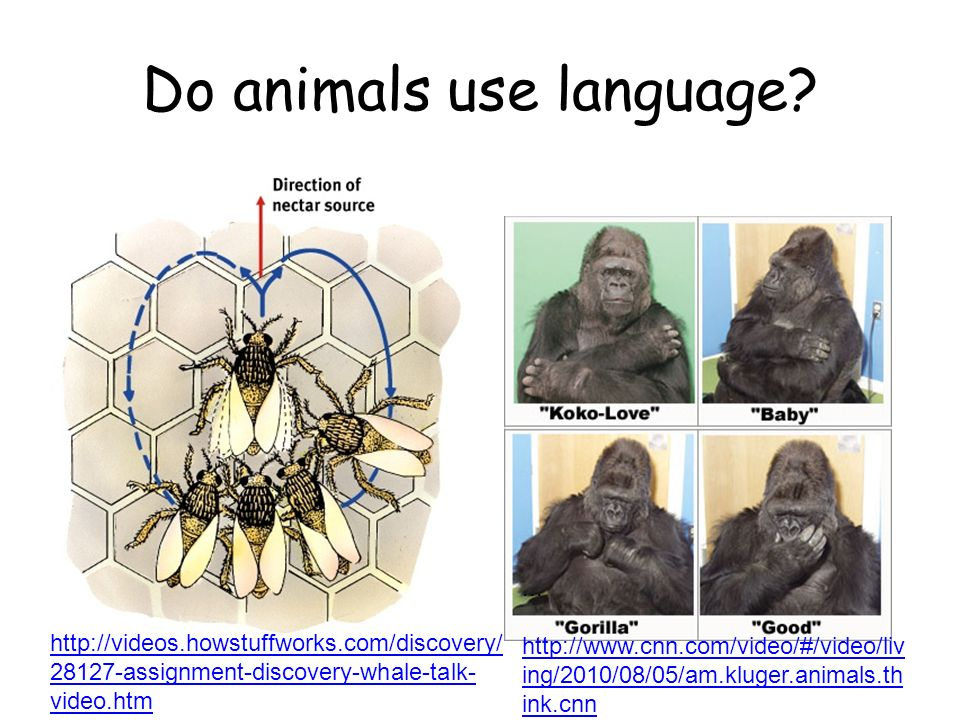 Do animals use language? http://videos.howstuffworks.com/discovery/ 28127-assignment-discovery-whale-talk- video.htm... http://www.cnn.com/video/#/vid