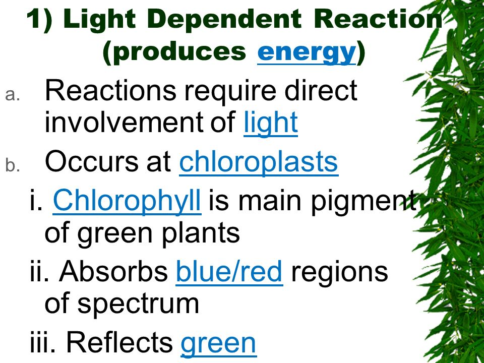 1) Light Dependent Reaction (produces energy) a. Reactions require direct involvement of light b. Occurs at chloroplasts i. Chlorophyll is main pigmen