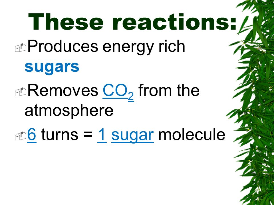 These reactions: Produces energy rich sugars Removes CO 2 from the atmosphere 6 turns = 1 sugar molecule