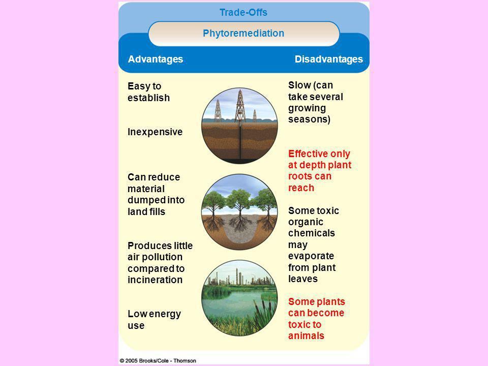 Cleaning up toxic wastes Physical methods: allow particles to settle and be filtered out Phytoremediation: using plants to absorb, filter, and remove