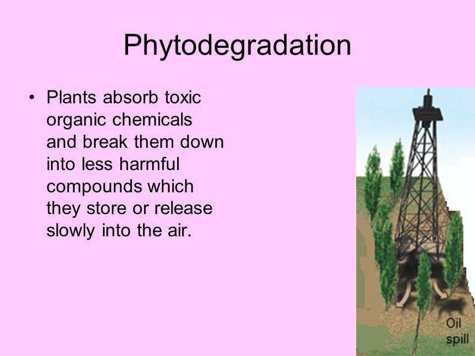 Phytostabilization Plants can absorb chemicals and keep them from reaching groundwater or nearby surface water.