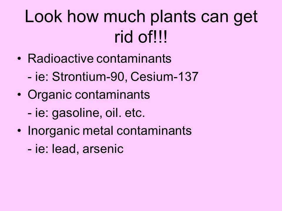 Inorganic metal contaminants Organic contaminants Radioactive contaminants Brake fern Poplar tree Indian mustard Oil spill Groundwater Soil Groundwate