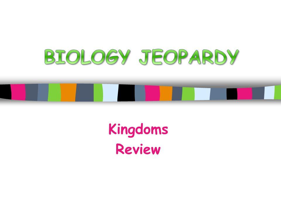 Kingdoms Review