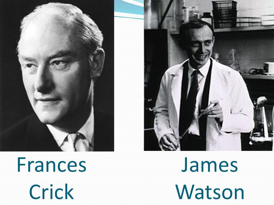 Frances Crick James Watson