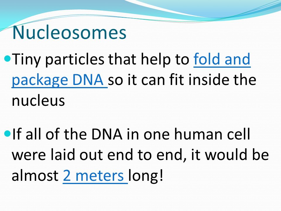 Nucleosomes Tiny particles that help to fold and package DNA so it can fit inside the nucleus If all of the DNA in one human cell were laid out end to