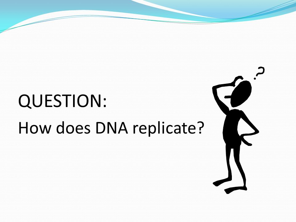 QUESTION: How does DNA replicate?